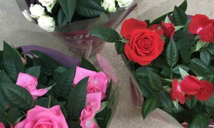 Baby Roses – Kif nieħdu ħsiebhom? – Roxanne Gauci Taliana