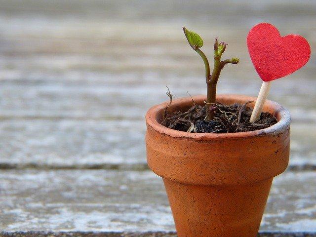 Mikrostorja: Jum San Valentinu – Elaine Gauci Scerri