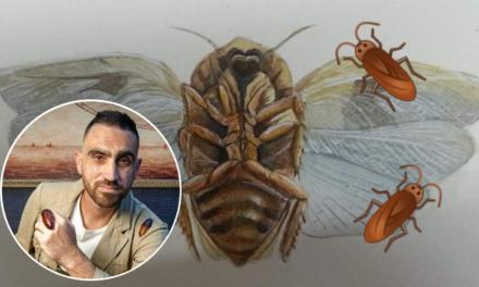 Naturalista lokali jagħmel żewġ skoperti ta' speċi ġodda ta' Wirdien f'Malta