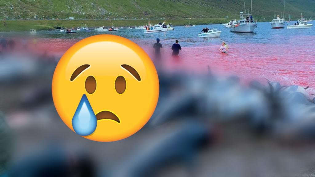 Gżejjer Faroe: Jinqatlu mijiet ta' dniefel u baleni bħala tradizzjoni